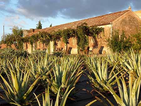 A Martano, dall'agave di Naturalis elisir di lunga vita (sembra il Messico....)