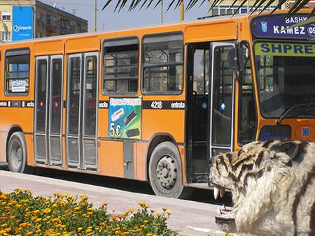 """Tirana, fermata Museo Nazionale, tigre e bus """"milanese"""" ...."""