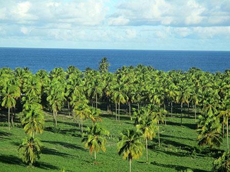 Costa del Pernambuco, mare e palme