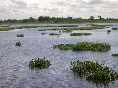 Nel Pantanal, acqua, appunto....