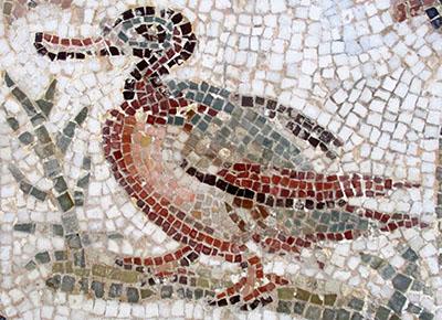 Tunisia El Djem museo mosaico romano rid z