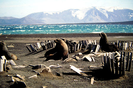 antartide deception island