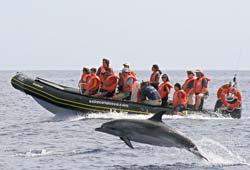 Osservazione dei delfini alle Azzorre