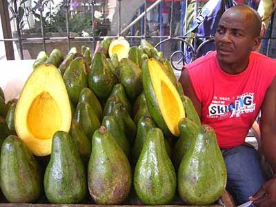 colombia colore avocados enormi