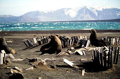 Antartide, estremo sud del sud America