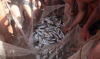 pesca alla tratta 4