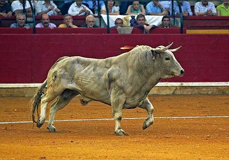Un toro Jabonero....